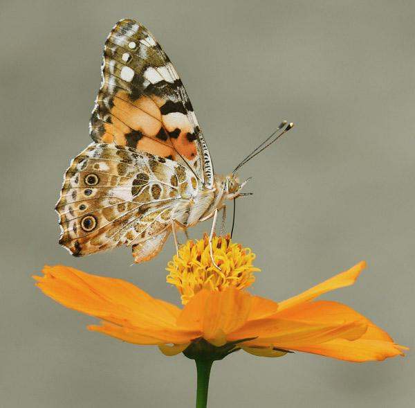 farfalla posata su un fiore - sentirsi liberi